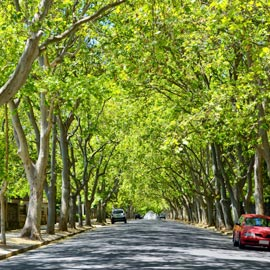 Unley green leafed trees on a sunny day